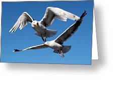 Aerial Dance Of The Seagulls Greeting Card