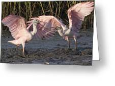 Dance Of The Spoonbill Greeting Card