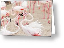 Dancing Beak To Beak Greeting Card