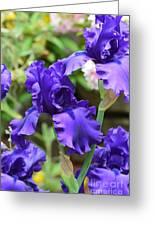 Dancing Blue Irises Greeting Card