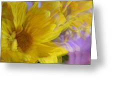 Dancing Daisy Greeting Card
