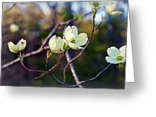 Dancing Dogwood Blooms Greeting Card