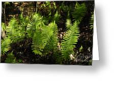 Dancing Ferns Greeting Card