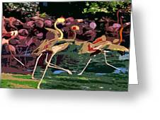 Dancing Flamingos  Greeting Card