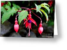 Dancing Fuchsia Greeting Card