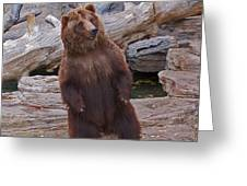 Dancing Grizzly Greeting Card