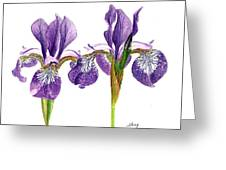 Dancing Iris Greeting Card