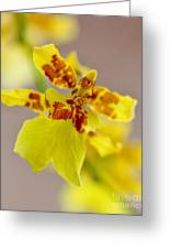 Dancing Lady Orchid Greeting Card