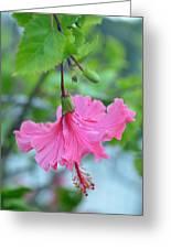 Dancing Lady Pink Hibiscus Greeting Card