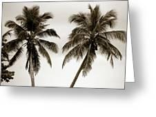 Dancing Palms Greeting Card by Susanne Van Hulst
