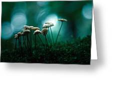 Dancing Parasol Mushrooms Greeting Card