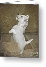 Dancing Puppy Greeting Card