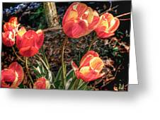 Dancing Tulips Greeting Card