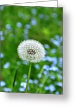 Dandelion 1 Greeting Card