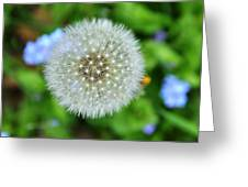 Dandelion 2 Greeting Card