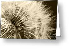 Dandelion 8 Greeting Card