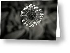 Dandelion.  Greeting Card