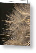 Dandelion Eighty Greeting Card