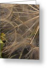 Dandelion Eighty Three Greeting Card