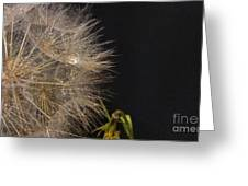 Dandelion Fifty Eight Greeting Card