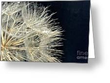 Dandelion Fifty Five Greeting Card
