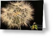 Dandelion Fifty Nine Greeting Card