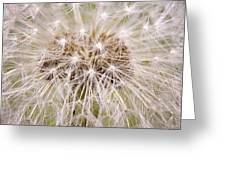 Dandelion Fireworks Greeting Card
