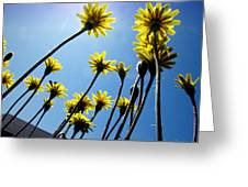 Dandelion Forest Greeting Card