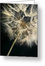 Dandelion Forty One Greeting Card