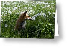 Dandelion Fox Greeting Card