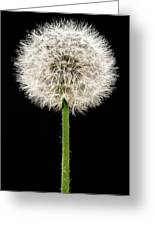 Dandelion Gone To Seed Greeting Card