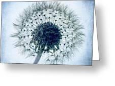 Dandelion In Blue Greeting Card