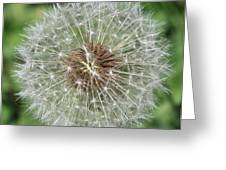 Dandelion Macro Greeting Card