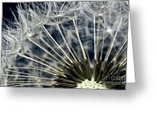 Dandelion Seed Head Greeting Card by Ryan Kelly