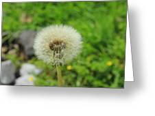 Dandelion Seed Greeting Card