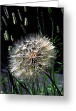Dandelion Seedball Greeting Card