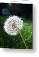 Dandelion Seeds 101 Greeting Card