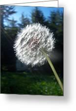 Dandelion Seeds 102 Greeting Card