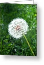 Dandelion Seeds 103 Greeting Card