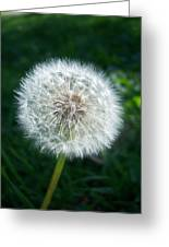 Dandelion Seeds 107 Greeting Card