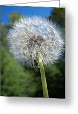 Dandelion Seeds 110 Greeting Card