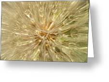 Dandelion Seeds Greeting Card