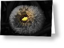 Dandelion Spotlight Greeting Card