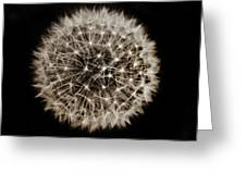 Dandelion Sun Greeting Card