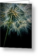 Dandelion Thirty Eight Greeting Card