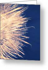 Dandelion Thirty One Greeting Card