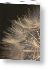Dandelion Twenty Greeting Card
