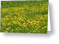 Dandelion Wine Greeting Card