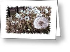 Dandelion Wishes Greeting Card by Myrna Migala