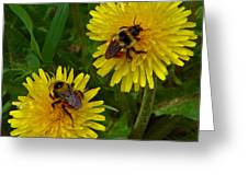 Dandelions And Bees Greeting Card